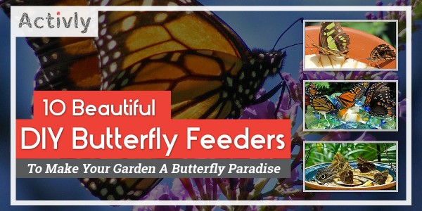 diy butterfly feeders